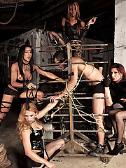 Four shemale dommes enjoy one slave