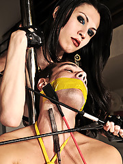 Slave is tied and owned by dominant shemales