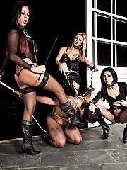 Pleasure and pain with three kinky shemlaes