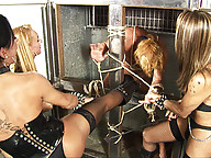 Rough hardcore bdsm shemale sex action